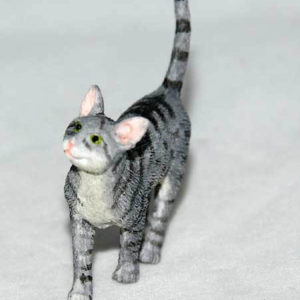 Grey tabby cat, standing