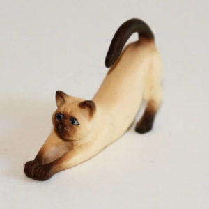 Siamese cat, stretching