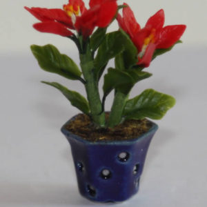 Blue china pot with poinsettia
