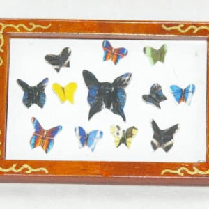 Butterfly collection picture